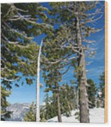 Trees And Snag At Crater Lake Wood Print