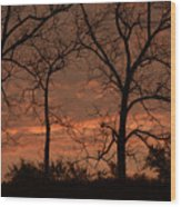 Trees And Sunrise Wood Print