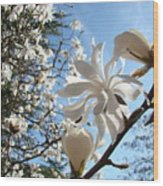 Trees Art Prints White Magnolia Flowers Baslee Troutman Wood Print