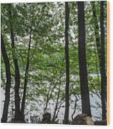 Trees At Lake Schlachtensee Wood Print