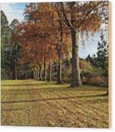 Trees At The Park Wood Print