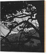 Trees Black And White - San Salvador Wood Print