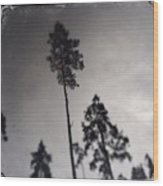 Trees Black And White Wetplate Wood Print