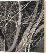 Trees Closeup Wood Print
