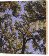 Trees Conversing Wood Print