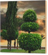 Trees In A Park Of Limassol City Sea Front In Cyprus Wood Print