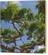 Trees In Bermuda Wood Print