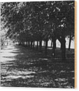 Trees In Chicago Wood Print