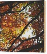 Trees In Fall Fashion Wood Print