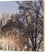 Trees In Ice Series Wood Print