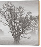 Trees In Mist- St Lucia Wood Print