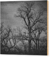 Trees In Storm In Black And White Wood Print