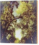 Trees In Summer Wood Print