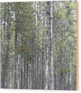 Trees In The Absarokee Beartooth Wilderness Area Wood Print