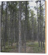 Trees In The Campground Wood Print