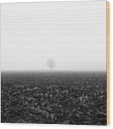 Trees In The Fog 1 Of 4 - Lombardy / Italy Wood Print