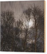 Trees In The Nigh Wood Print