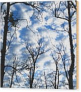 Trees In The Sky Wood Print