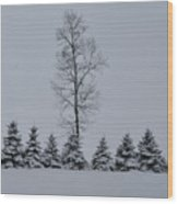 Trees In The Snow Wood Print