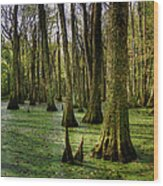 Trees In The Swamp Wood Print