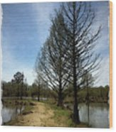 Trees In Water Garden Wood Print