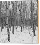 Trees In Winter Snow, Black And White Wood Print