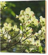 Trees Landscape Art Sunlit White Dogwood Flowers Baslee Troutman Wood Print