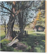 Trees Near Rhug. Wood Print by Harry Robertson