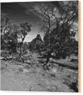 Trees Of Canyon Lands Wood Print