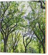 Trees Of Central Park, Nyc Wood Print