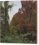 Trees Of Colorful Leaves In Autumn Mi Wood Print