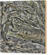 Trees Of Ziarat Wood Print
