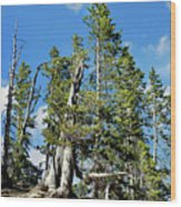 Trees On The Edge 1 Wood Print