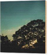 Trees - San Salvador V Wood Print