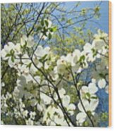 Trees Sunlit White Dogwood Art Print Botanical Baslee Troutman Wood Print