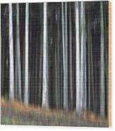 Trees Trunks Wood Print by Bernard Jaubert
