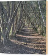 Trees Under Cover 3 Wood Print