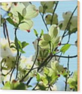 Trees White Dogwood Flowers 9 Blue Sky Landscape Art Prints Wood Print