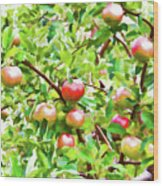 Trees With Red Apples In An Orchard Wood Print