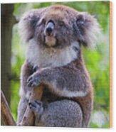 Treetop Koala Wood Print