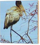 Treetop Stork Wood Print