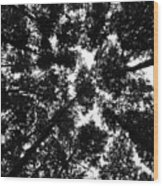 Treetops Wood Print