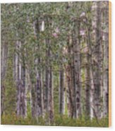 Trembling Aspens Wood Print