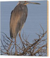 Tri Color Heron Wood Print