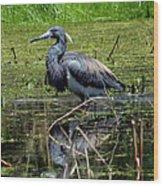 Tri-colored Heron 12 Wood Print