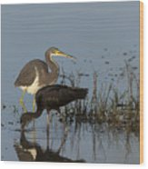 Tri-colored Heron And Glossy Ibis Wood Print