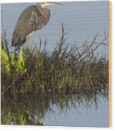 Tri-colored Heron And Reflection Wood Print