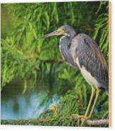 Tri-colored Heron At Sunset  Wood Print