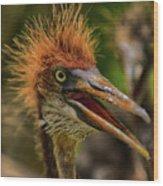 Tri Colored Heron Chick Wood Print
