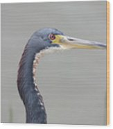 Tri Colored Heron Wood Print